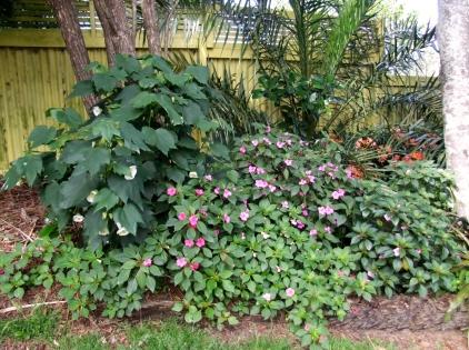 Backyard_Garden_Scene_(10061346296)